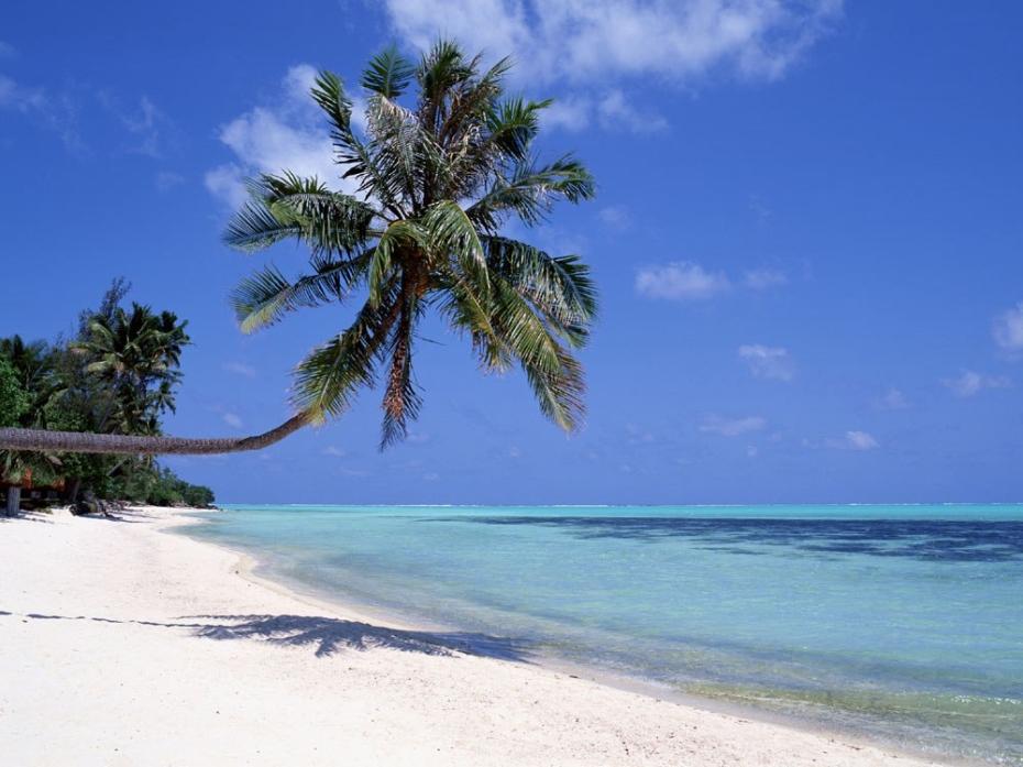 Fiji Beach with Coconut Tree - Robert McGregor, Simon Roberts