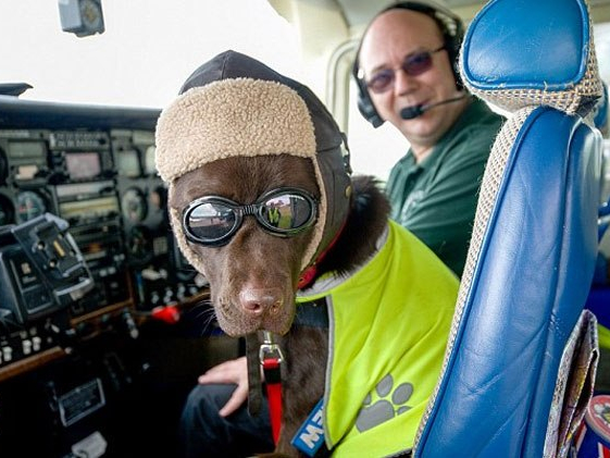 Dog Gets Honorary Pilot's Licence. Put an end to honorary commissions in the New Zealand Defence Force.